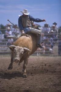Bronco Rider Holding On